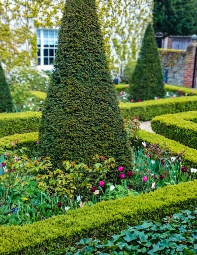 classic-yew-and-box-planting_