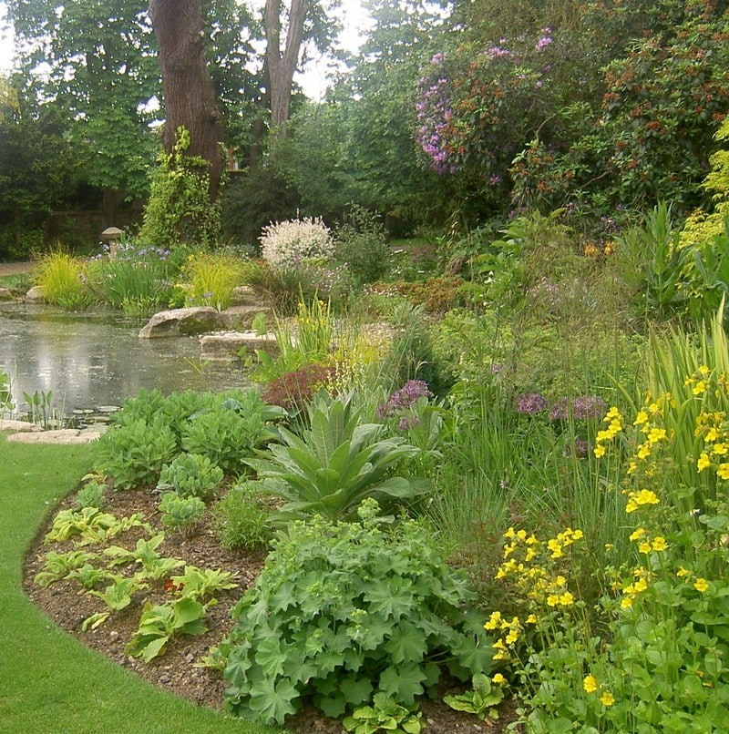 Herbaceous border design and planting purely planting for Herbaceous border design examples