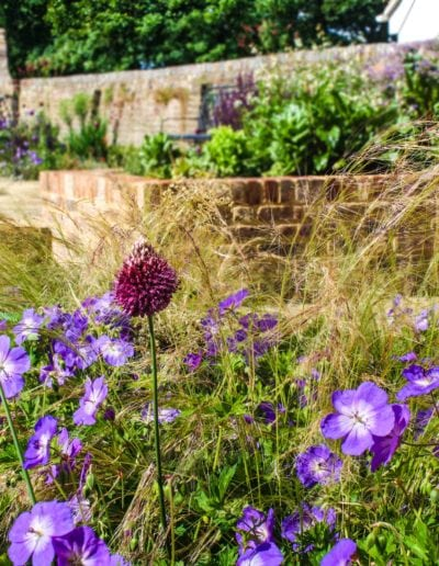 alliumsgeranium-stipa