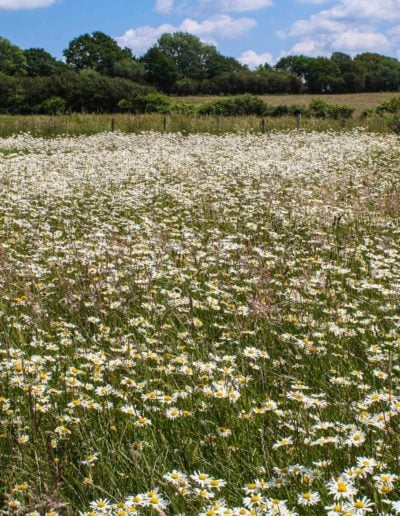 first-year-of-meadow