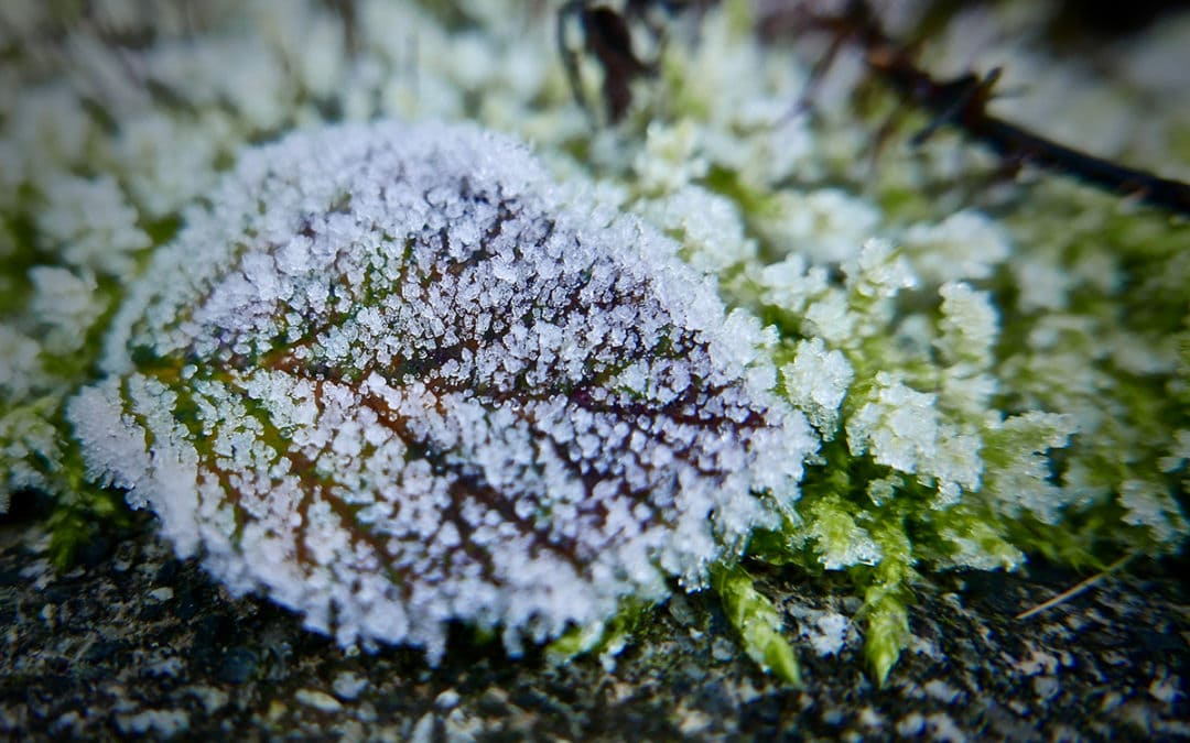 Tips for looking after your garden in Winter