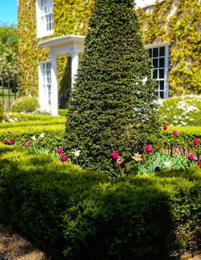 Dramatic-yew-topiary_