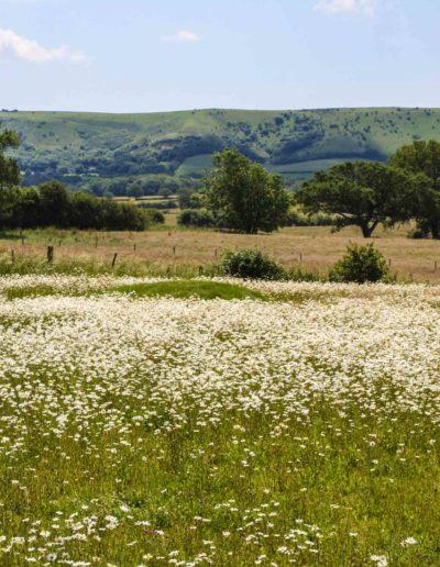Native-wildflower-meadow