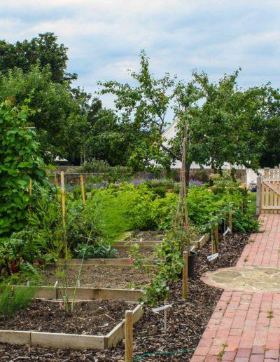 the-vegeatable-garden