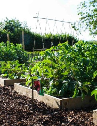 vegetable-plot-over-flowing